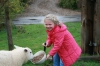 Young Guest Feeding a Lamb